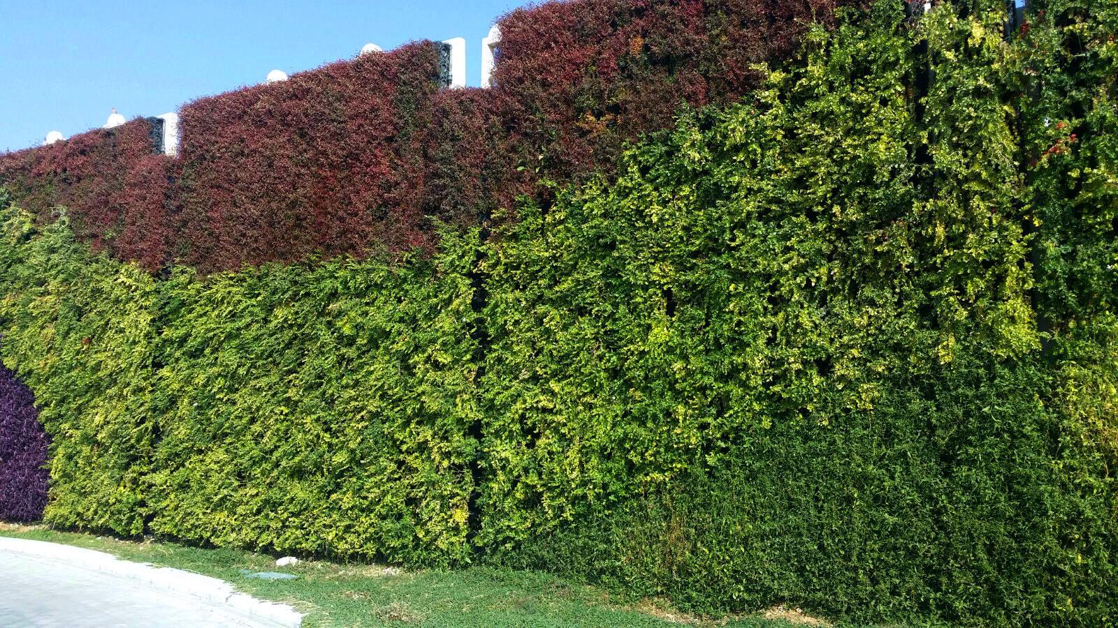 Outdoor green wall atlantis aurora for Outdoor vertical wall garden