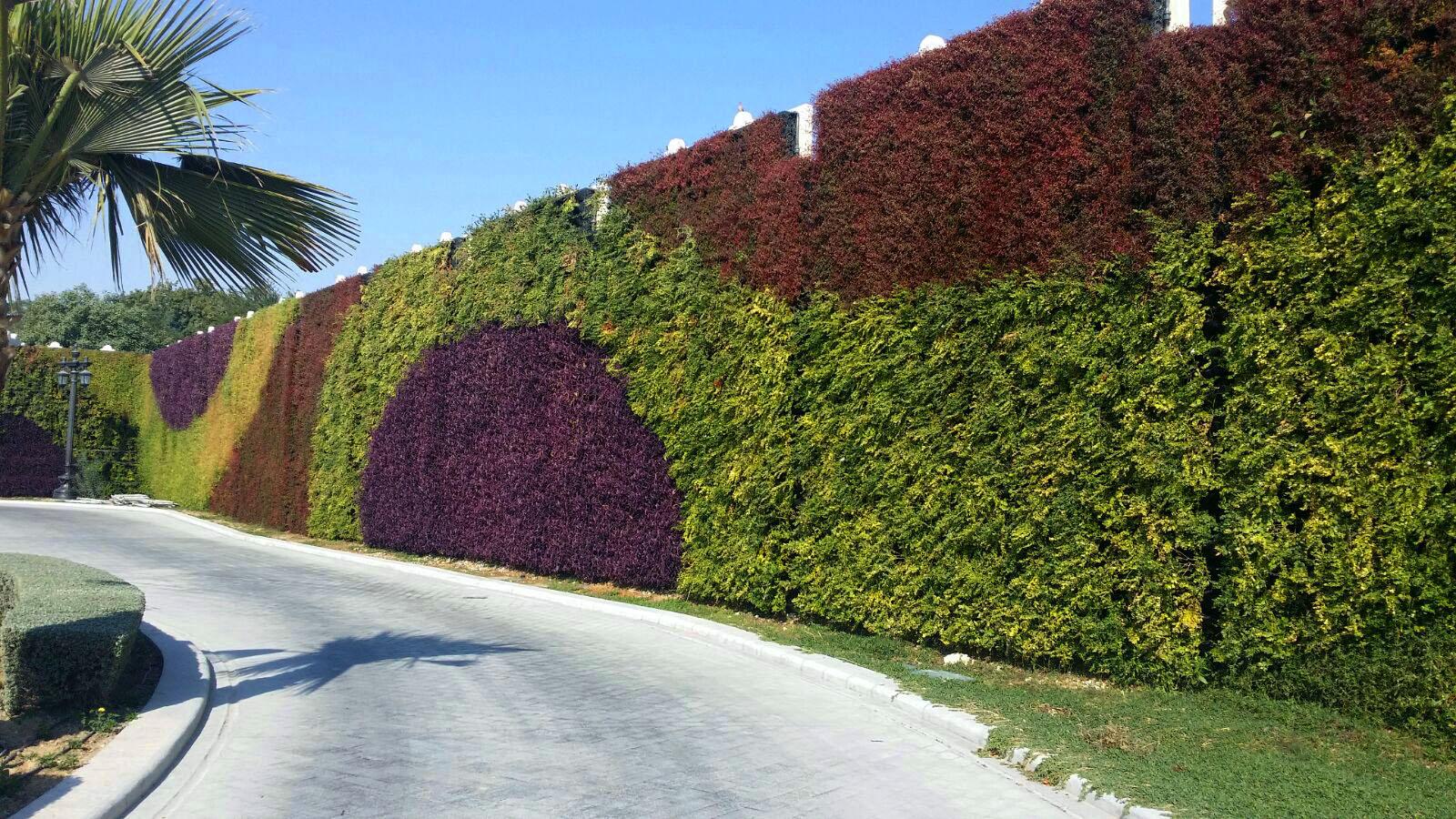 Green Wall ...