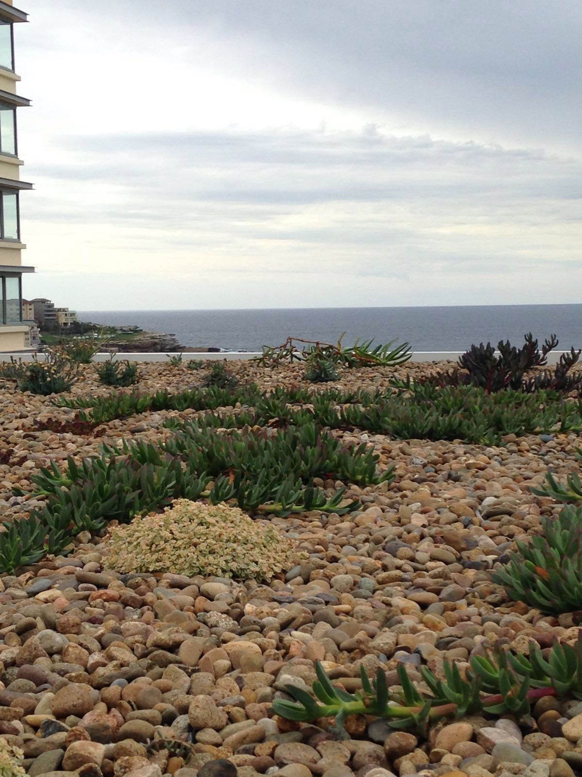 Green Roof Bondi Beach Australia