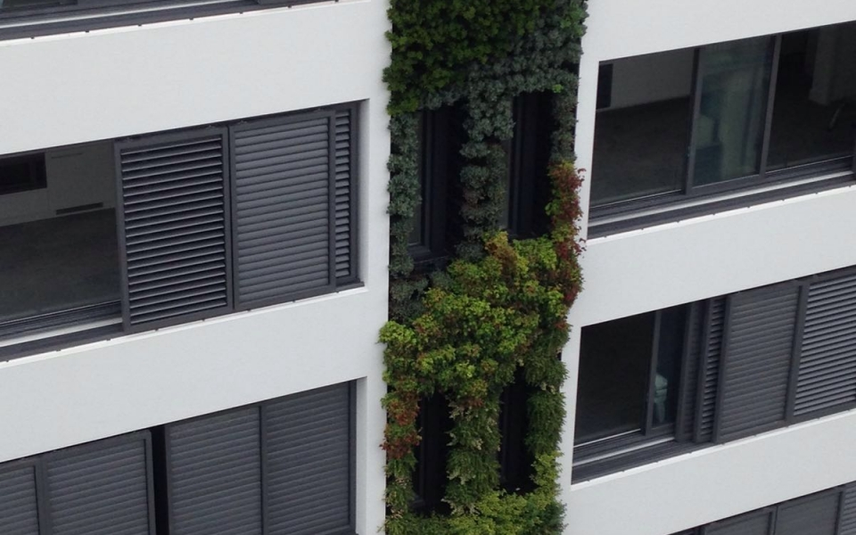 Green Wall Vertical Garden Installation Bondi Beach Australia