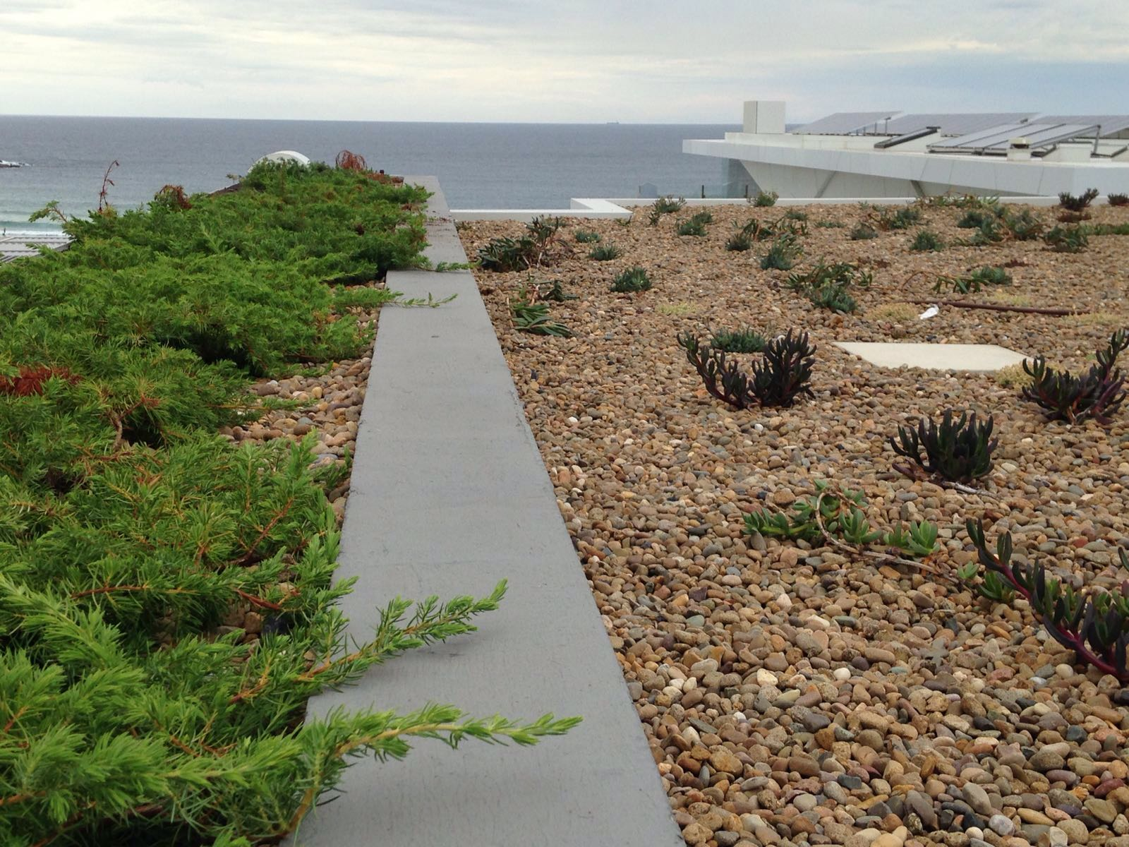Green Roof Bondi Beach Sydney Australia