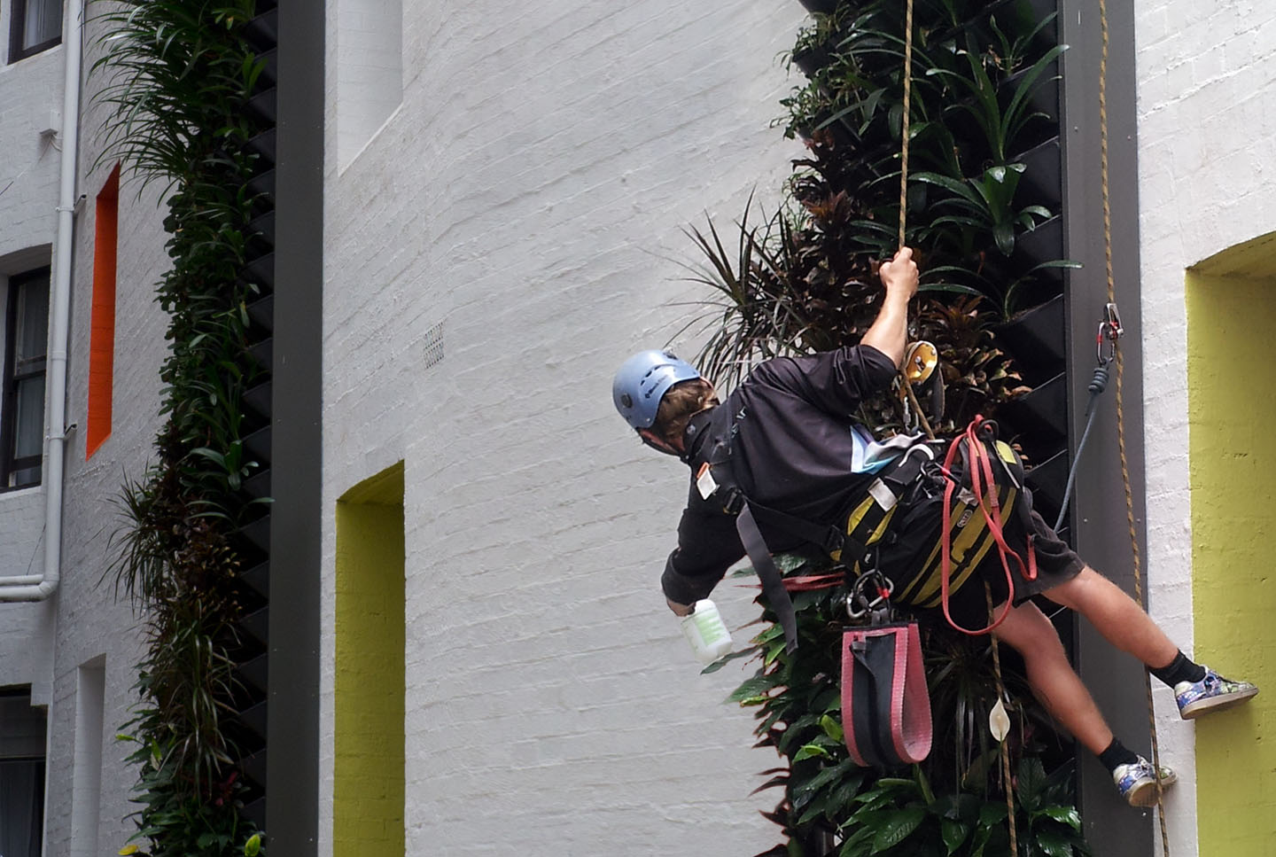 Atlantis Aurora Vertical Garden Maintenance Speacialist