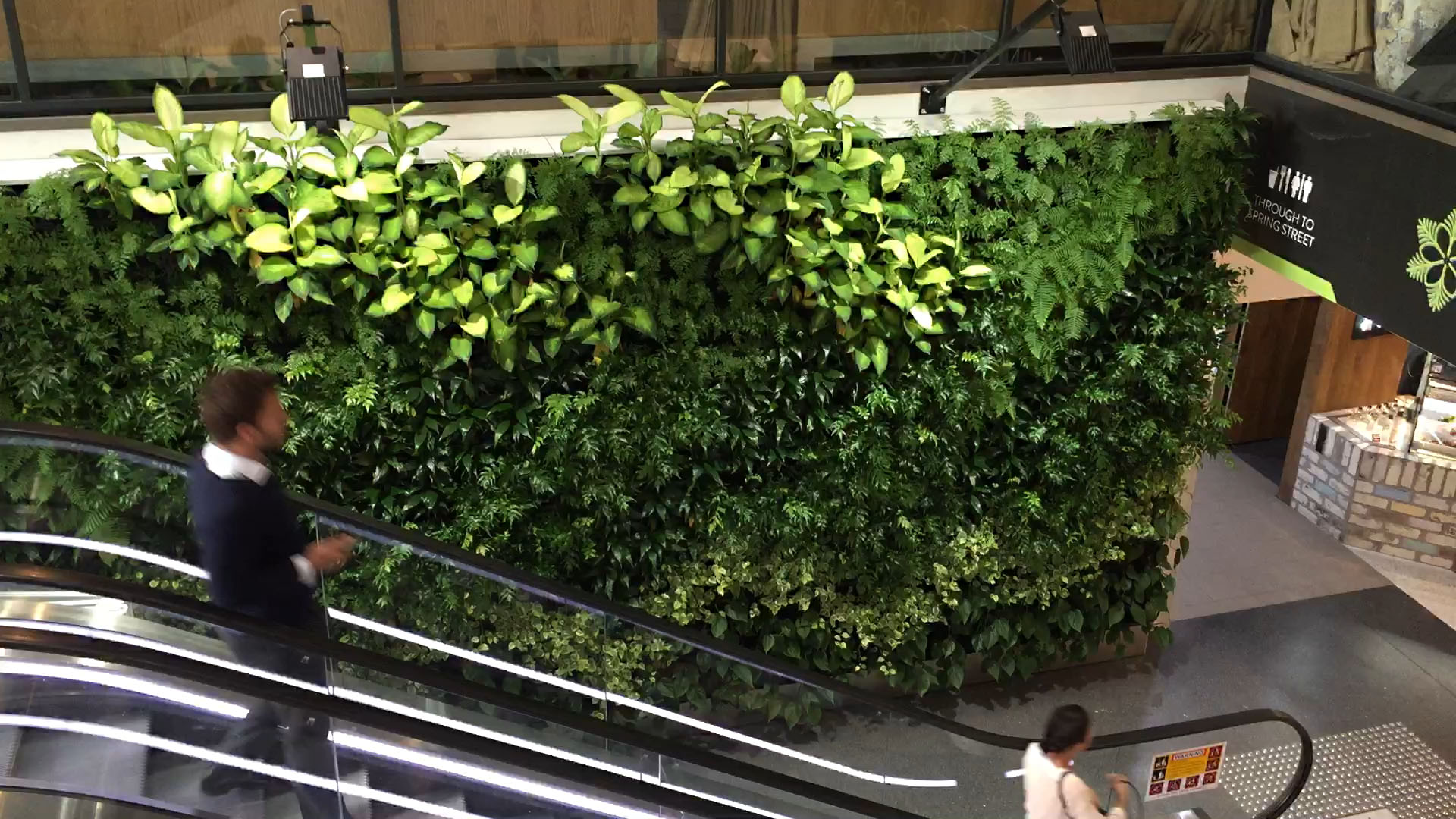 Indoor Green Wall Atlantis Aurora