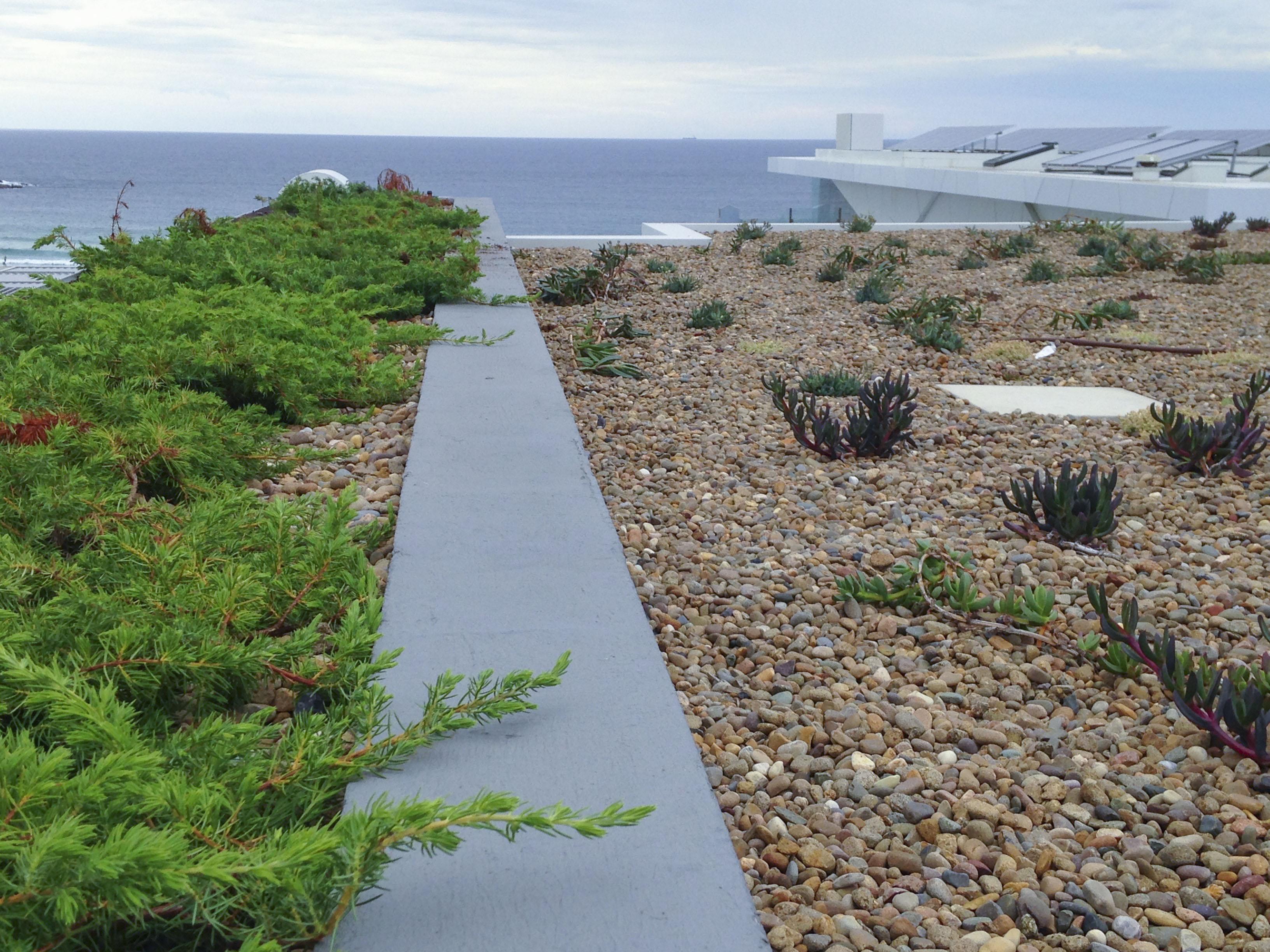 Bondi Beach Roof Garden - Green Roof
