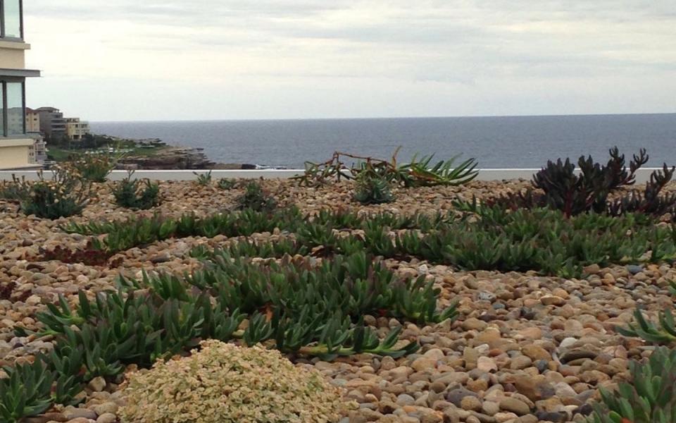 Green Roof Bondi Beach Australia